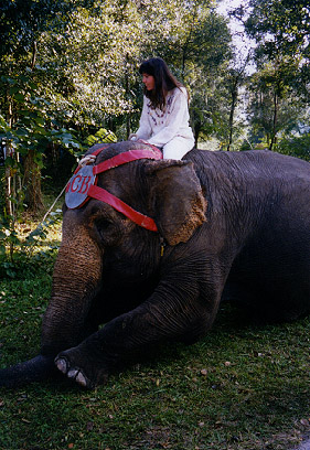 Sherri on an Elephant